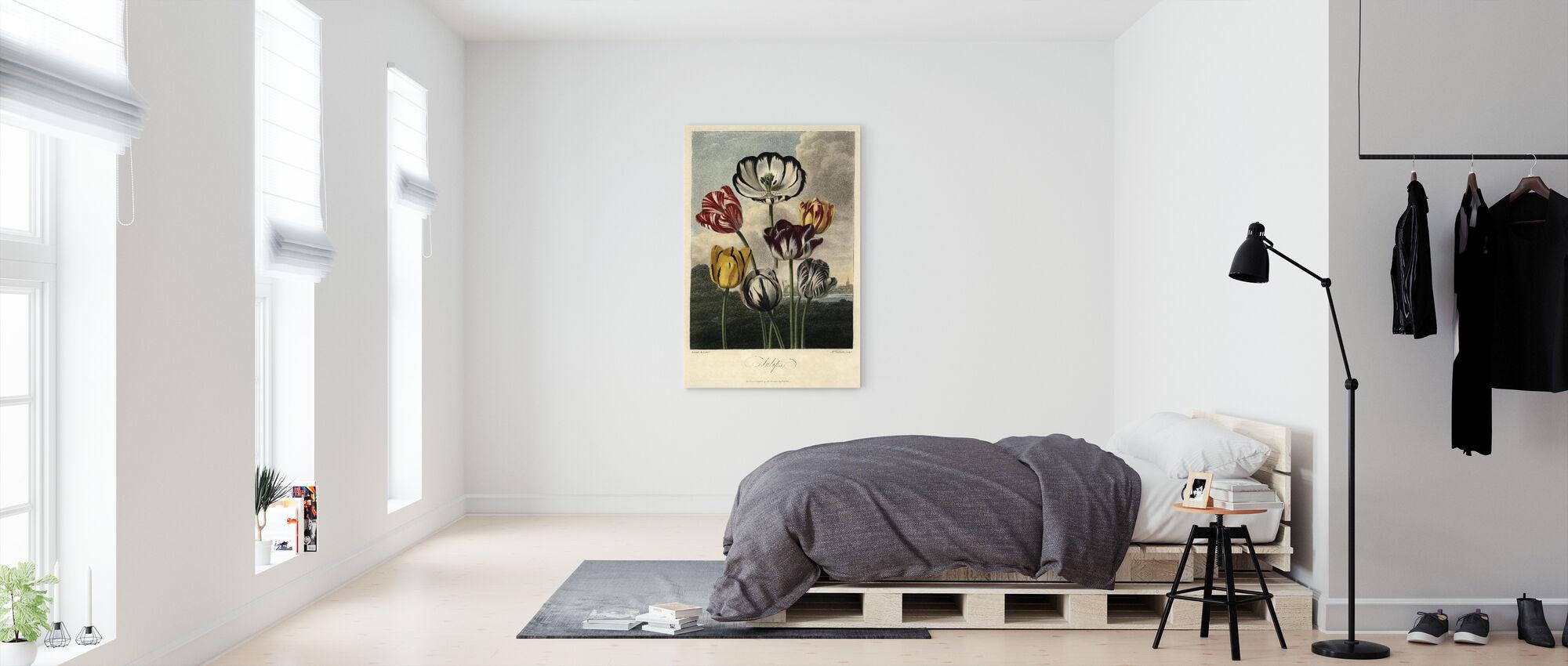 Tulip Varieties - Canvas print - Bedroom