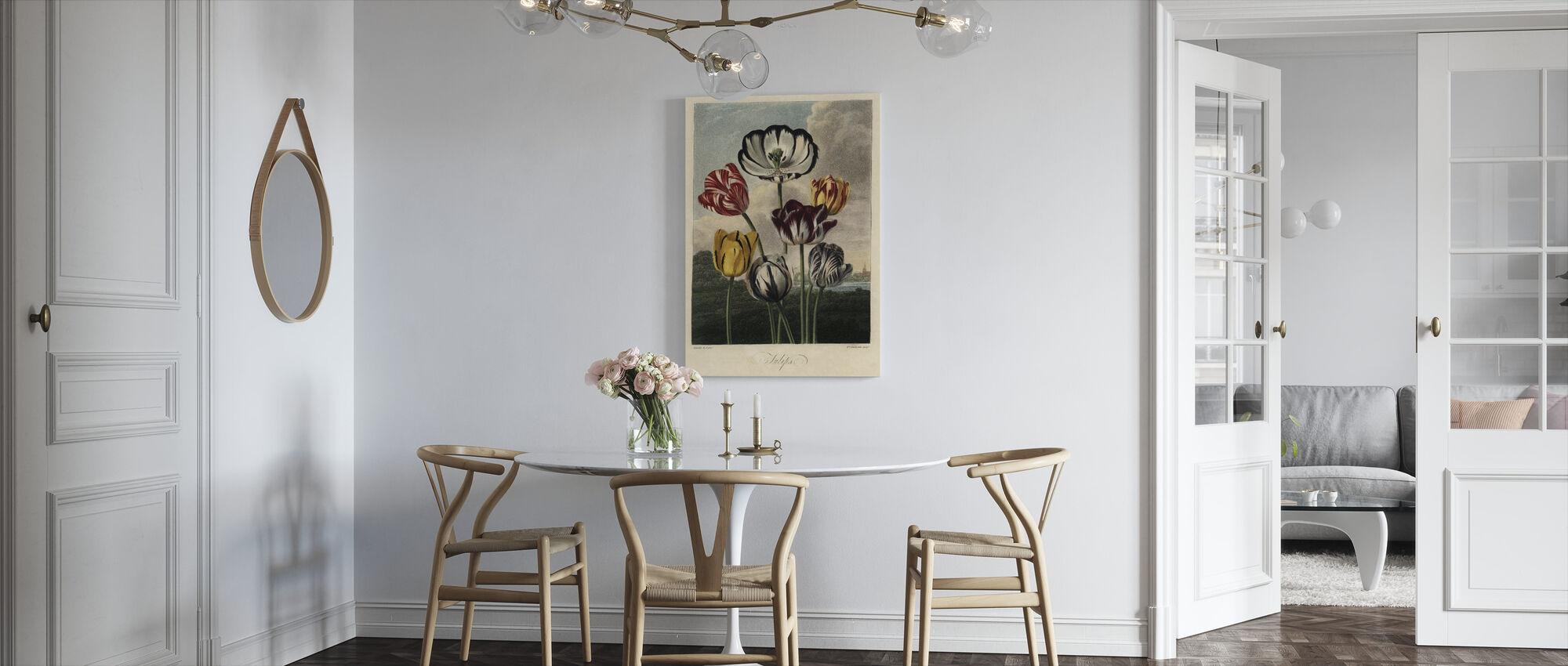 Tulip Varieties - Canvas print - Kitchen