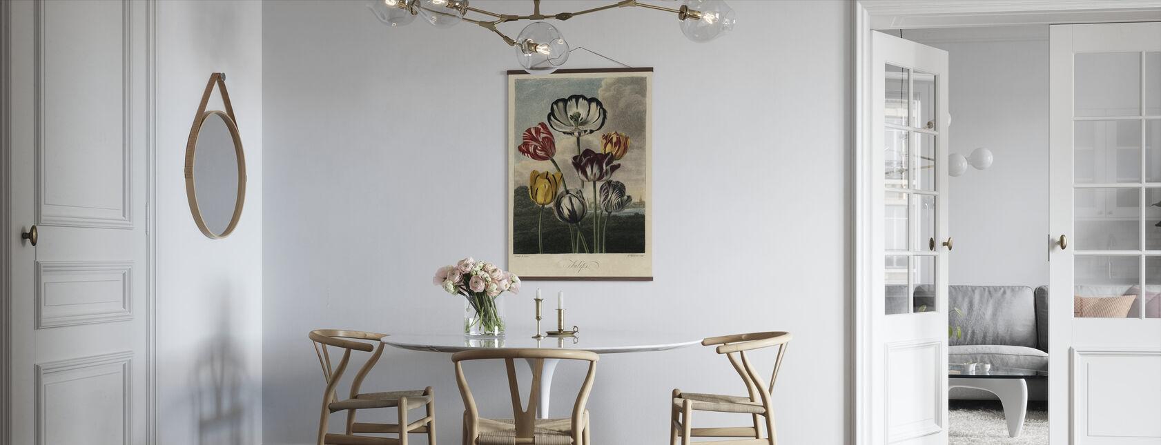 Tulipan sorter - Plakat - Køkken