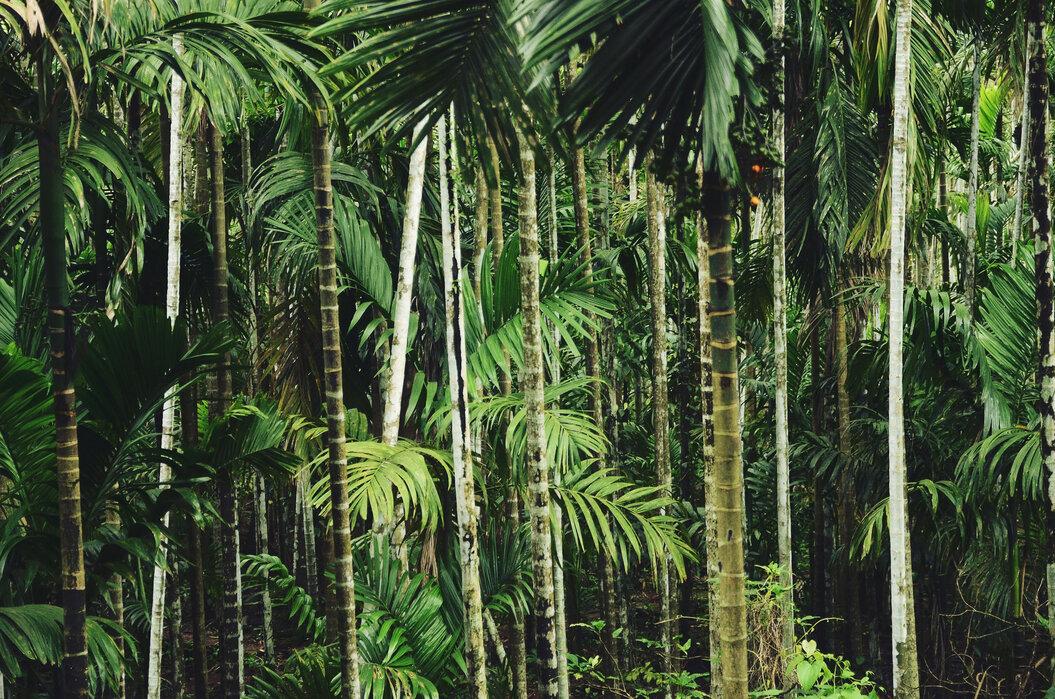 Bambu punkki - Canvastaulu