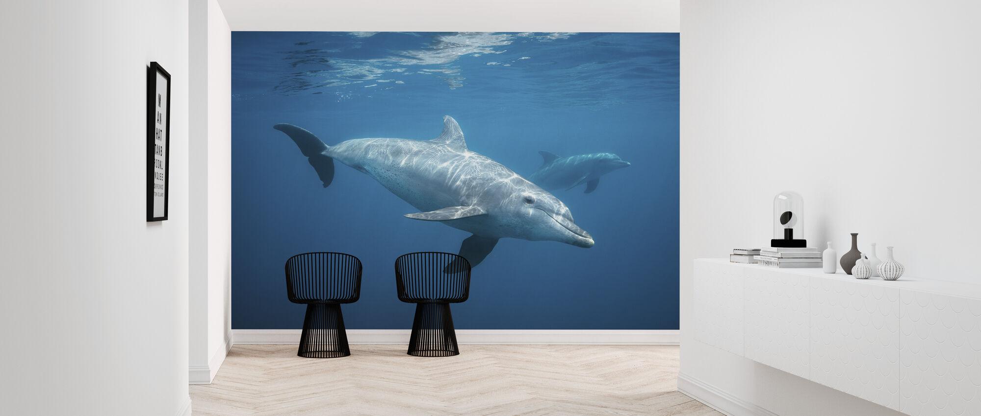 Curious Dolphin - Wallpaper - Hallway
