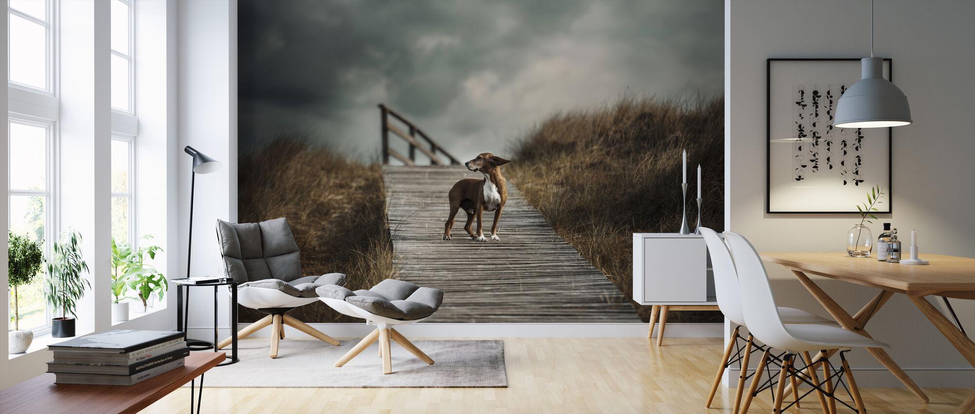 Dog on Boardwalk - Wallpaper - Living Room