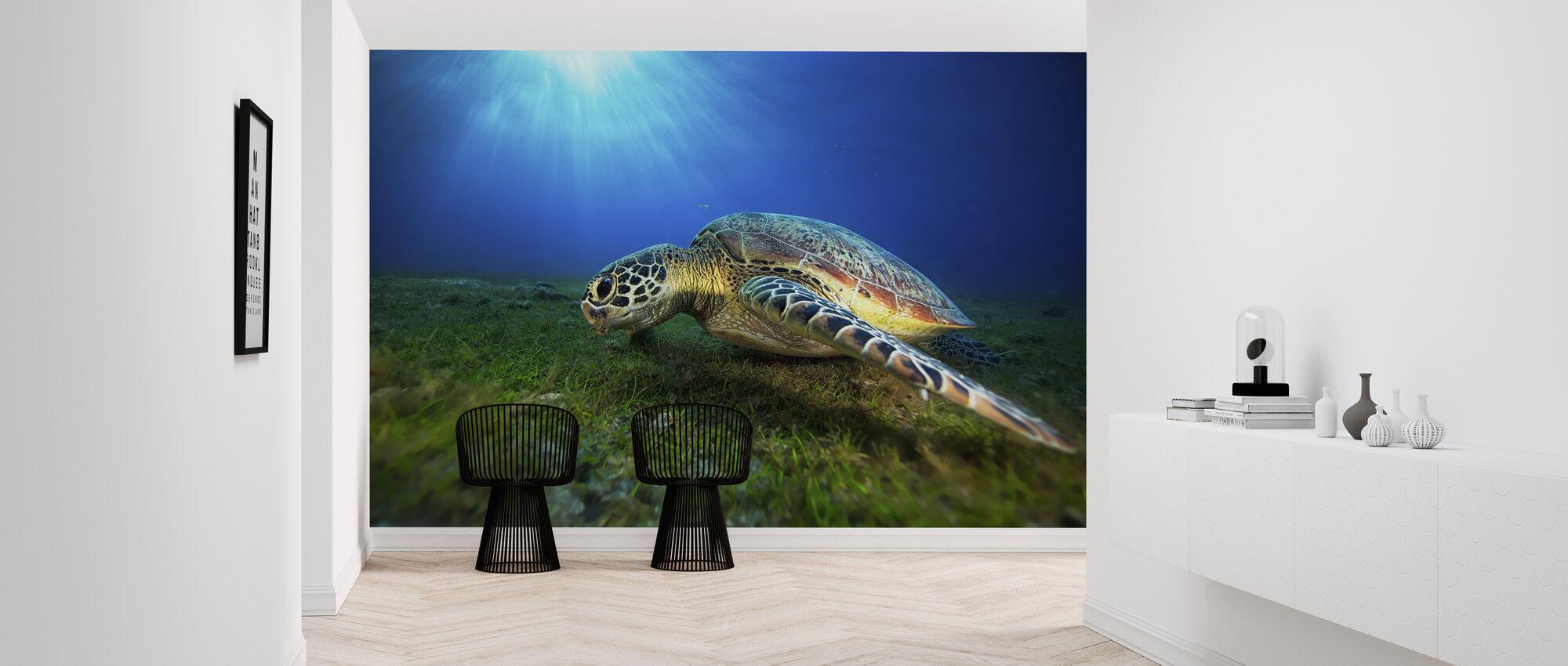Green Turtle - Wallpaper - Hallway