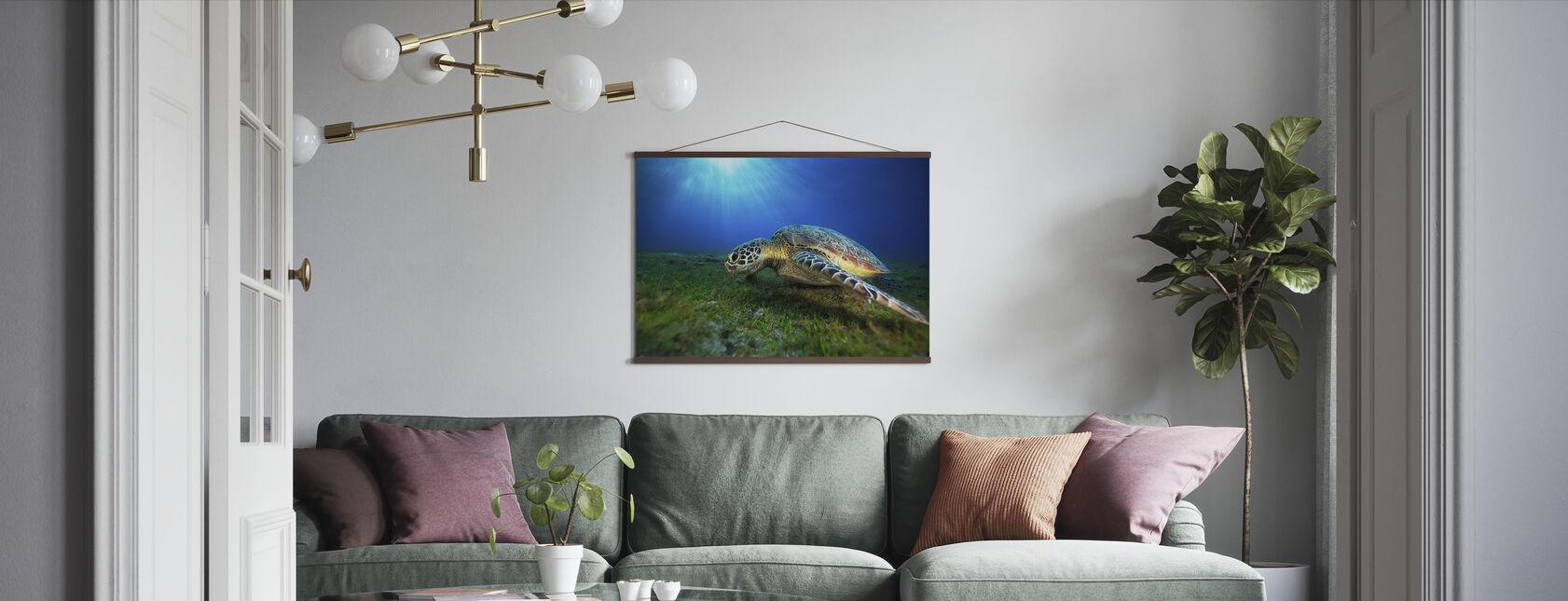 Grön sköldpadda - Poster - Vardagsrum
