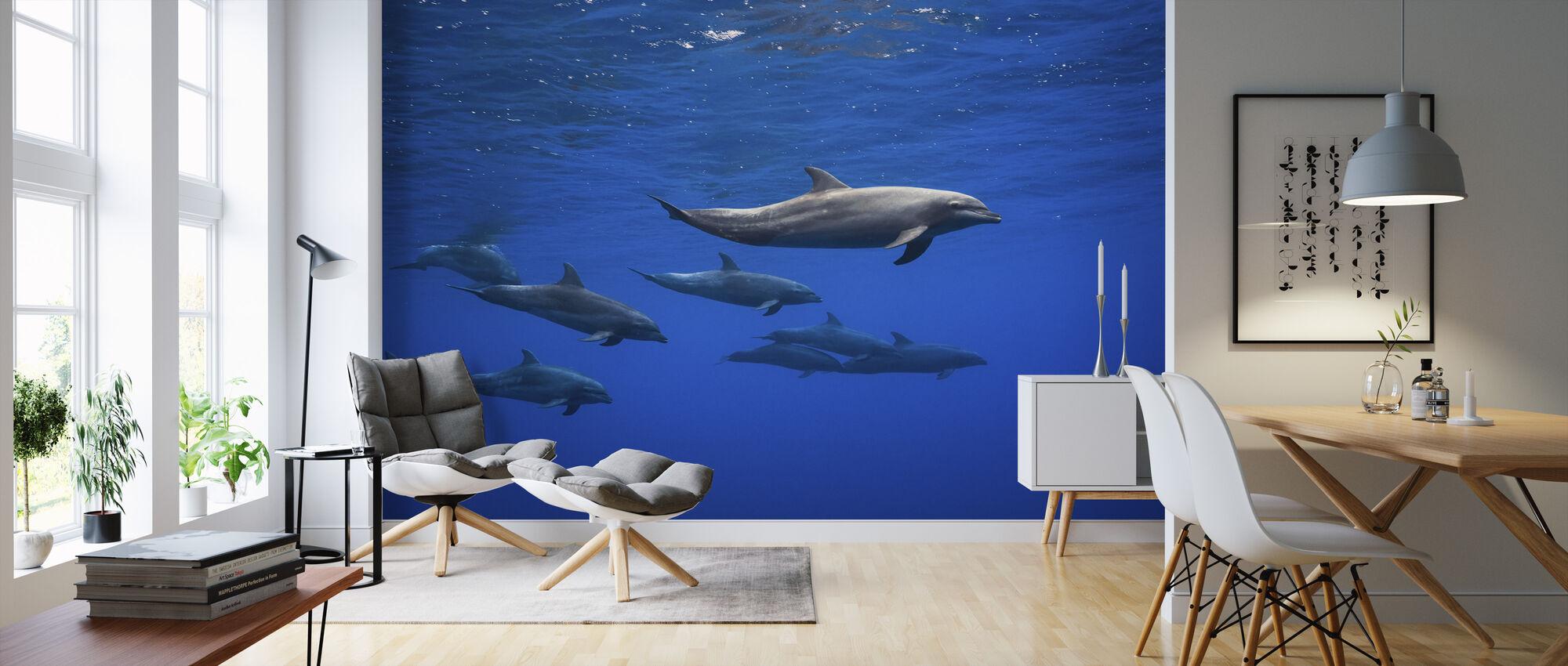 Dolphins - Wallpaper - Living Room