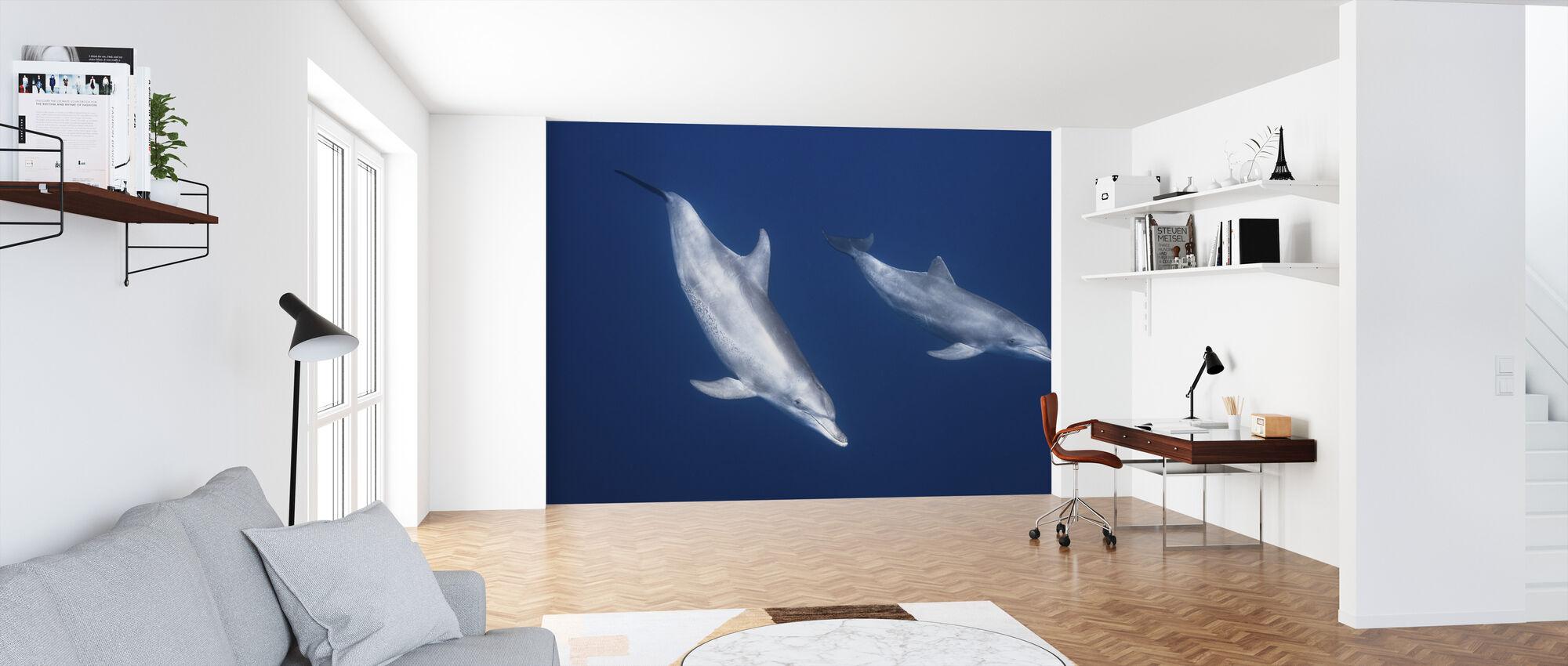 Bottlenose Dolphins - Wallpaper - Office