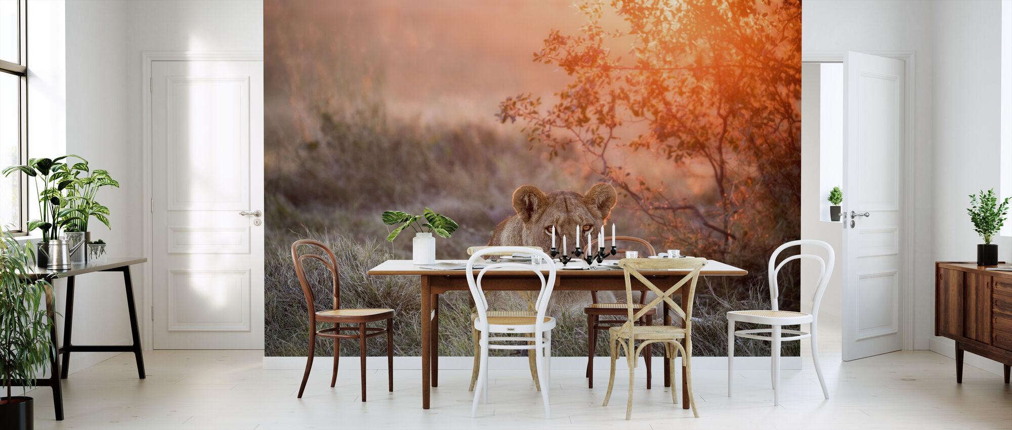 Sunset Lioness - Wallpaper - Kitchen