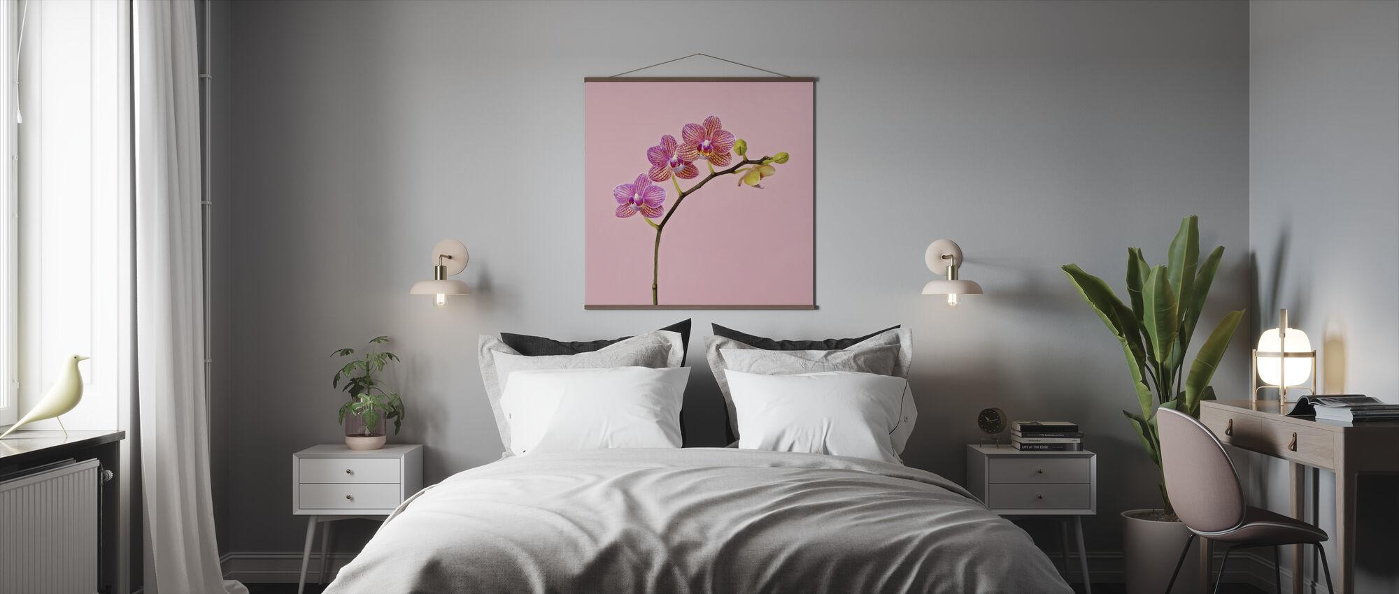 Rosa Orkide - Plakat - Soverom