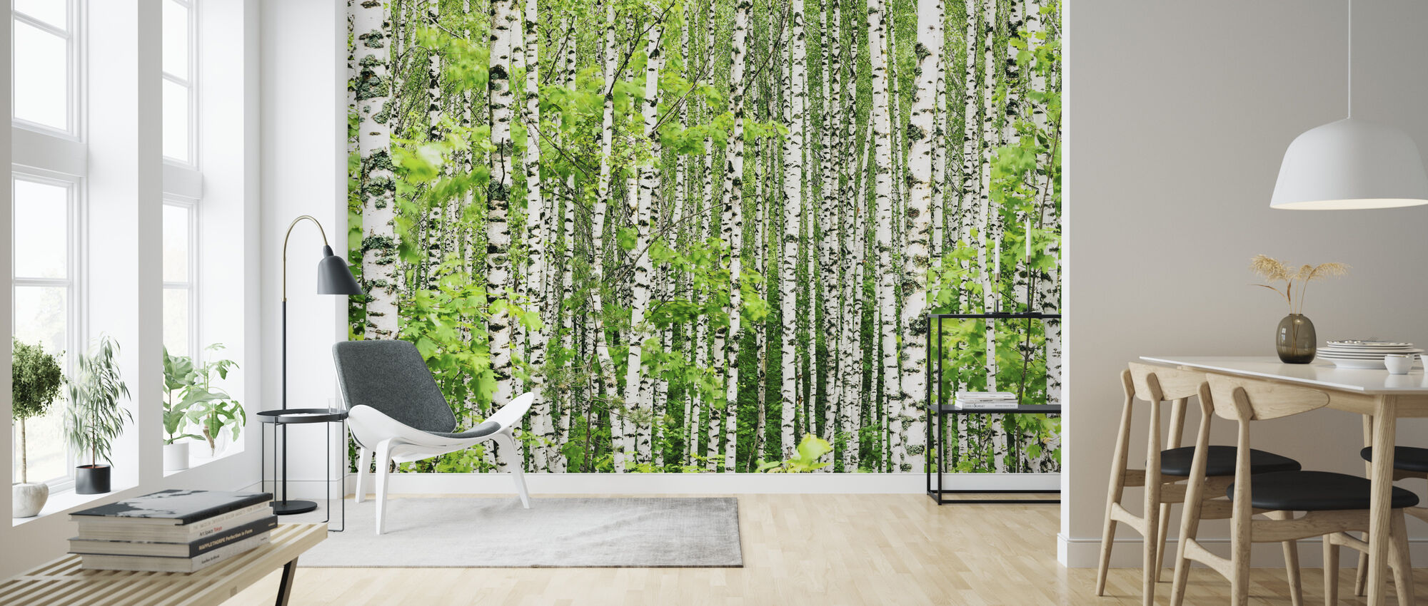 Birch Trees - Wallpaper - Living Room
