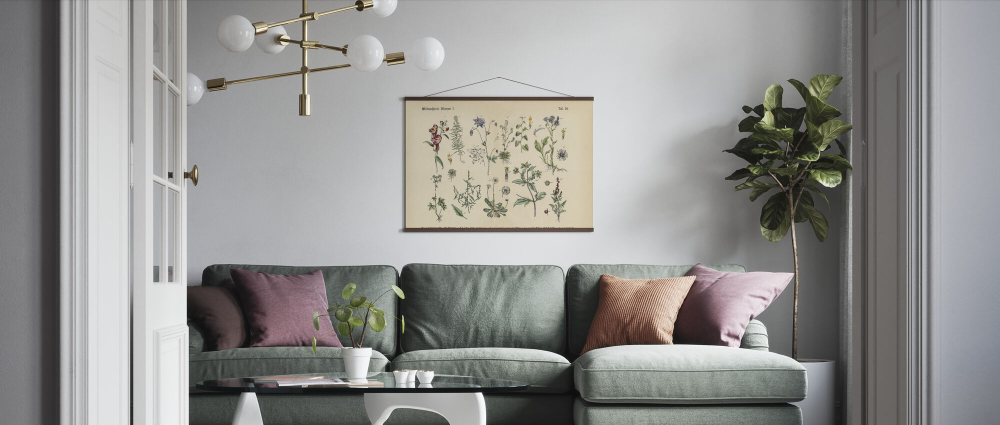 Wildflower and Medicinal Herbal Plants - Poster - Living Room