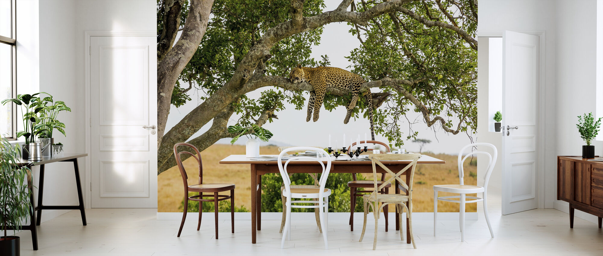 Leopardi nukkuu puussa - Tapetti - Keittiö