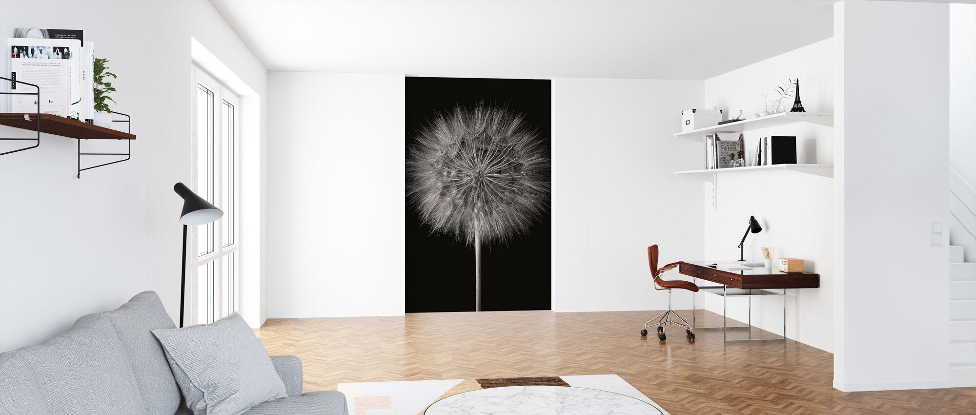 Dandelion Fluff on Black - Wallpaper - Office