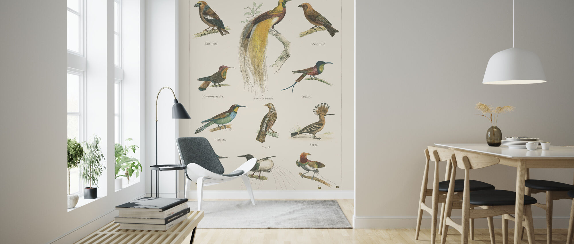 Bird Chart I - Wallpaper - Living Room