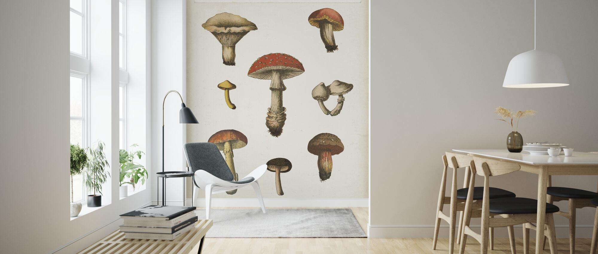 Mushroom Chart - Wallpaper - Living Room
