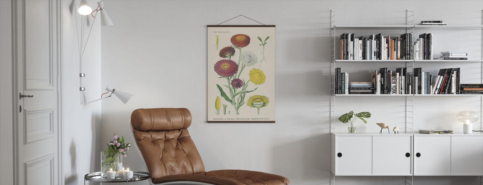 Antique Botanical - Poster - Living Room