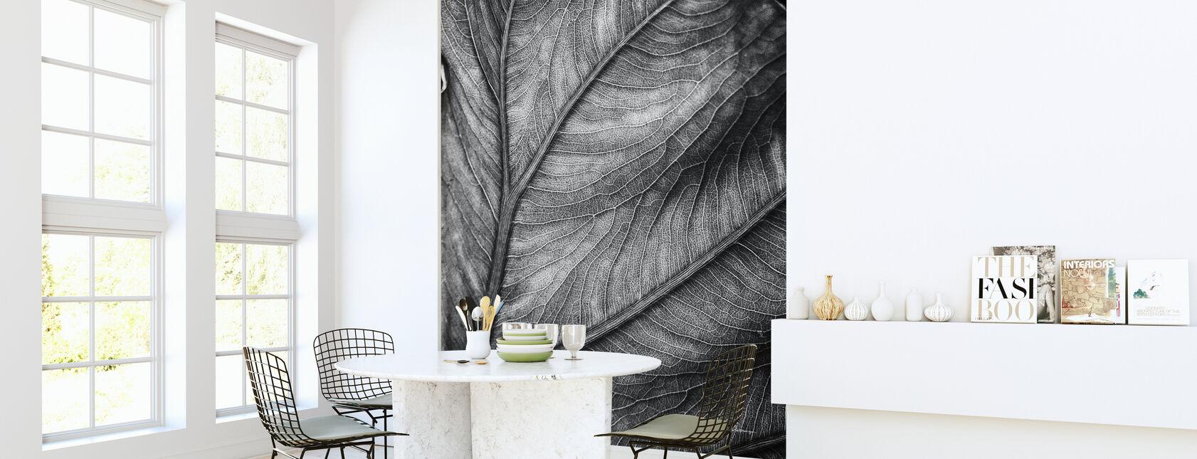 Elephant Ear - Wallpaper - Kitchen