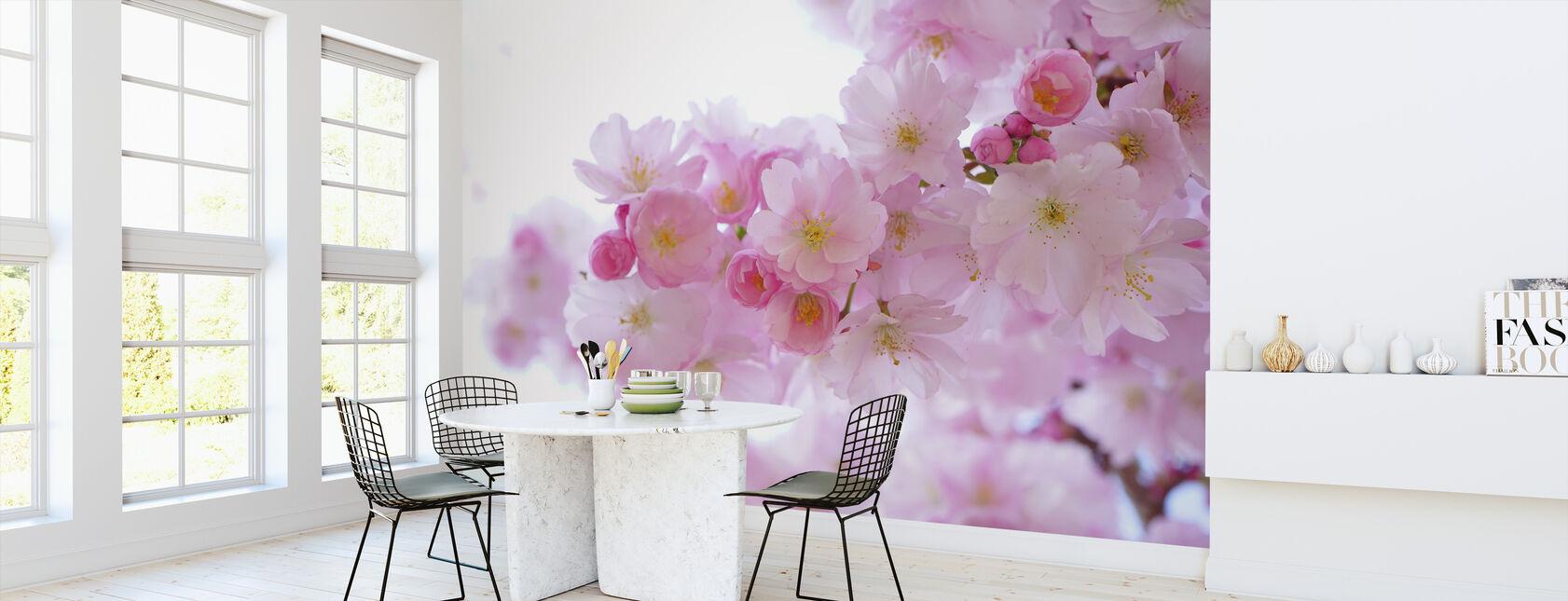 Blomstrer Kirsebær Blomst - Tapet - Køkken
