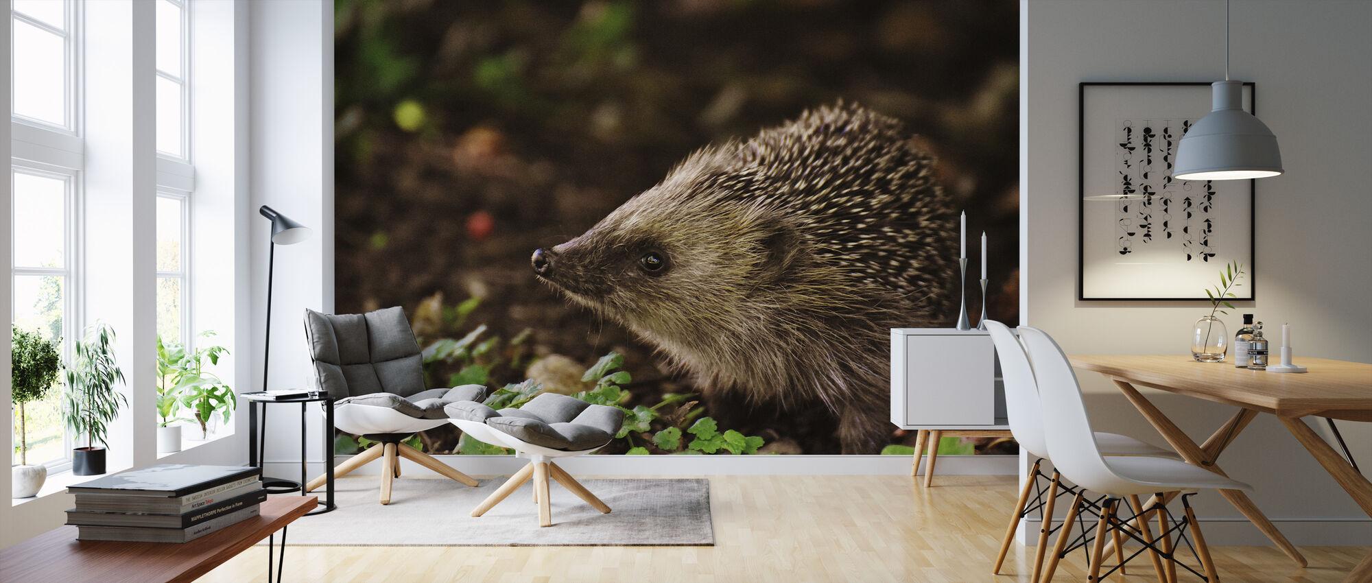 Curious Hedgehog - Wallpaper - Living Room
