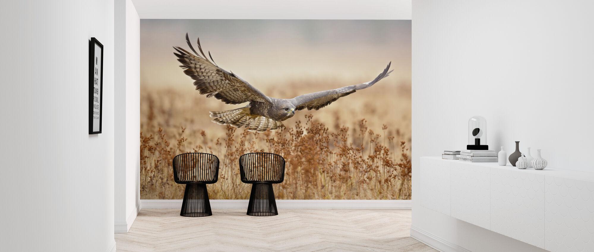 Common Buzzard - Wallpaper - Hallway