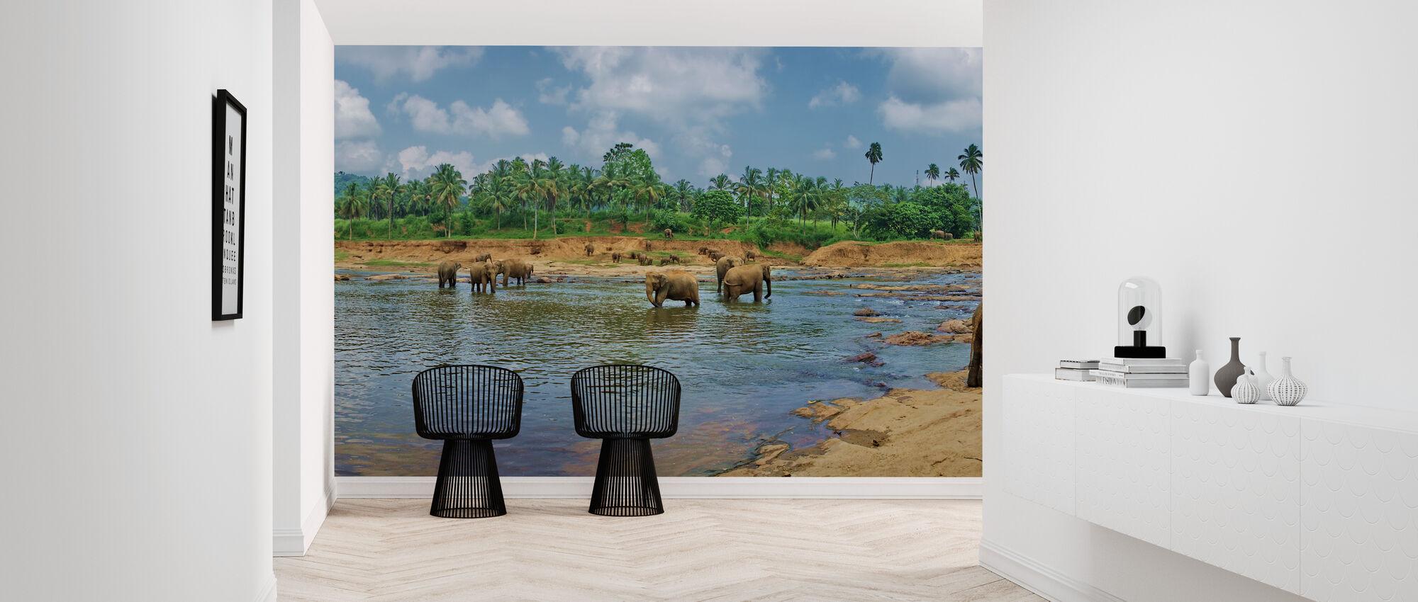 Park with Elephants - Wallpaper - Hallway