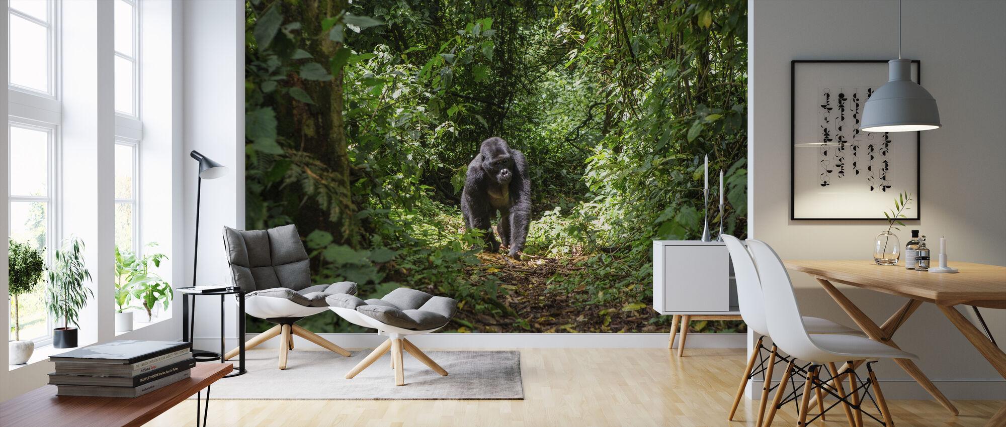 Male Mountain Gorilla - Wallpaper - Living Room