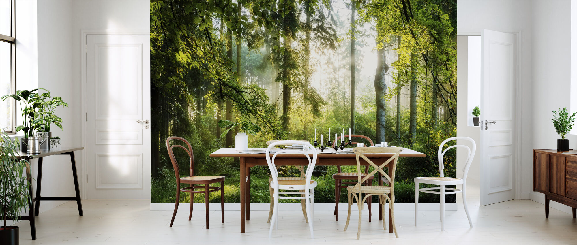 Sunrise in the Forest - Wallpaper - Kitchen