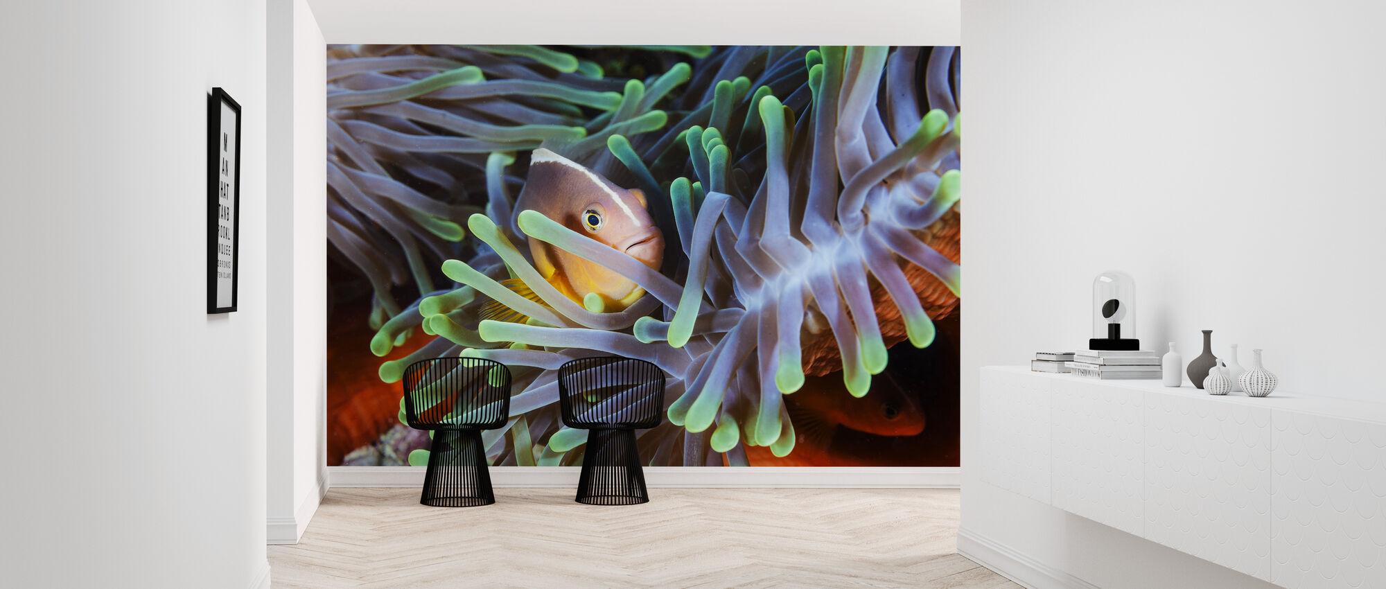 Clownfish - Wallpaper - Hallway