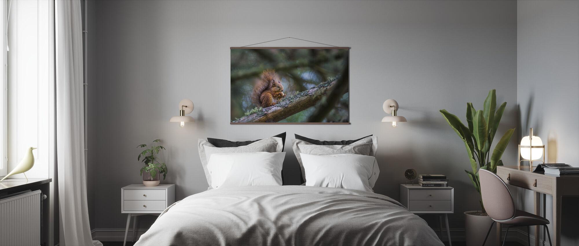 Squirrel - Poster - Bedroom