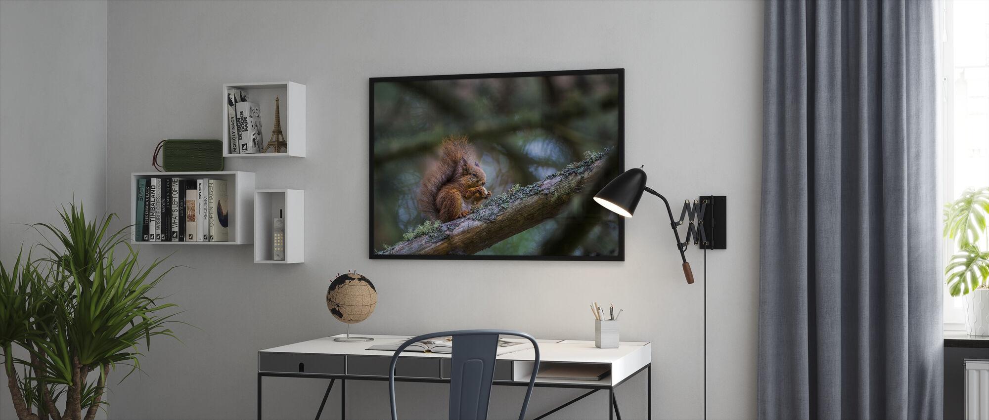 Squirrel - Framed print - Office