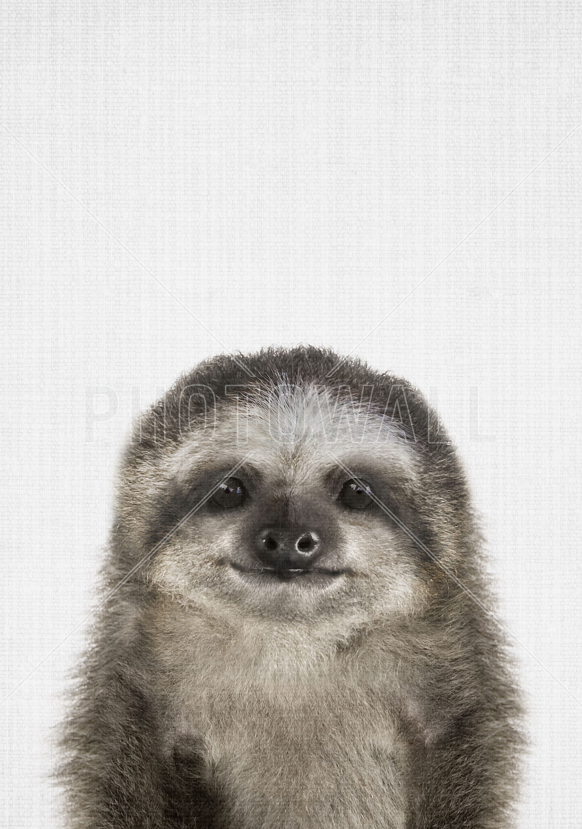 Baby Sloth Made To Measure Wall Mural Photowall