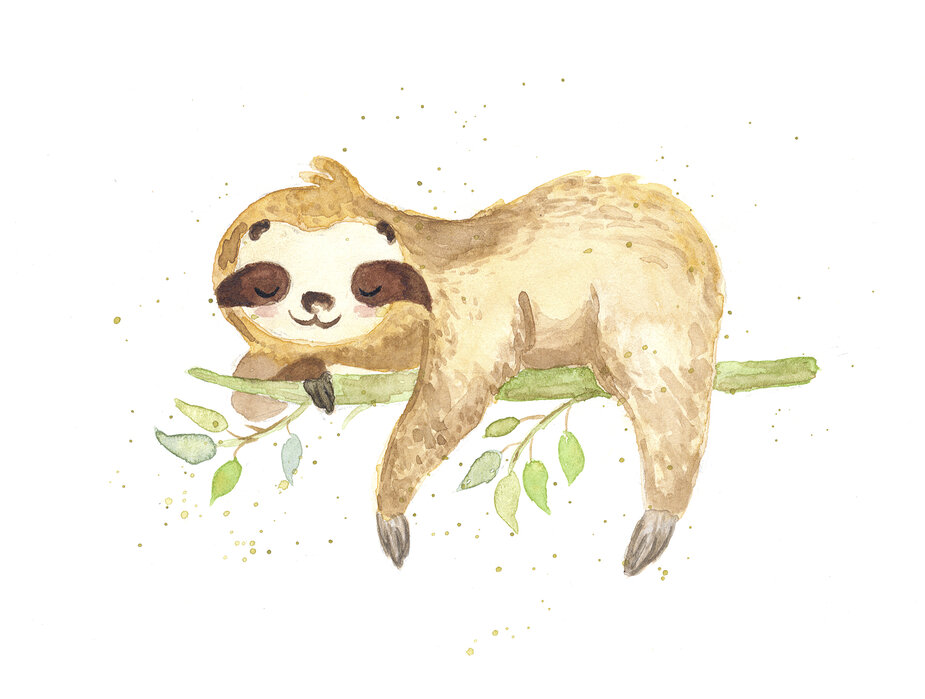 Sloth A Wall Mural For Every Room Photowall