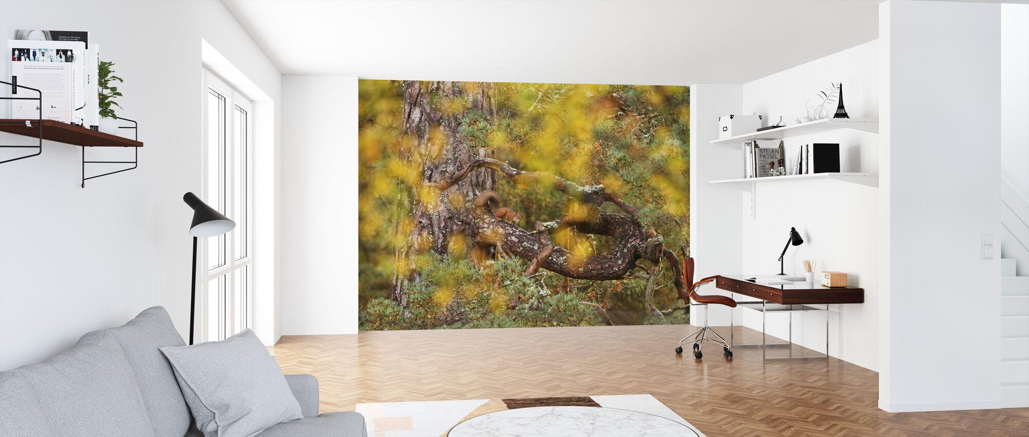 Puna-orava Vanhalla Mäntypuulla - Tapetti - Toimisto
