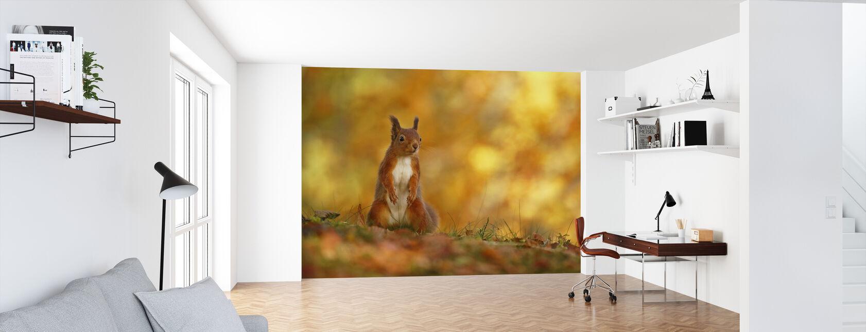 Rødt ekorn på skogbunn - Tapet - Kontor