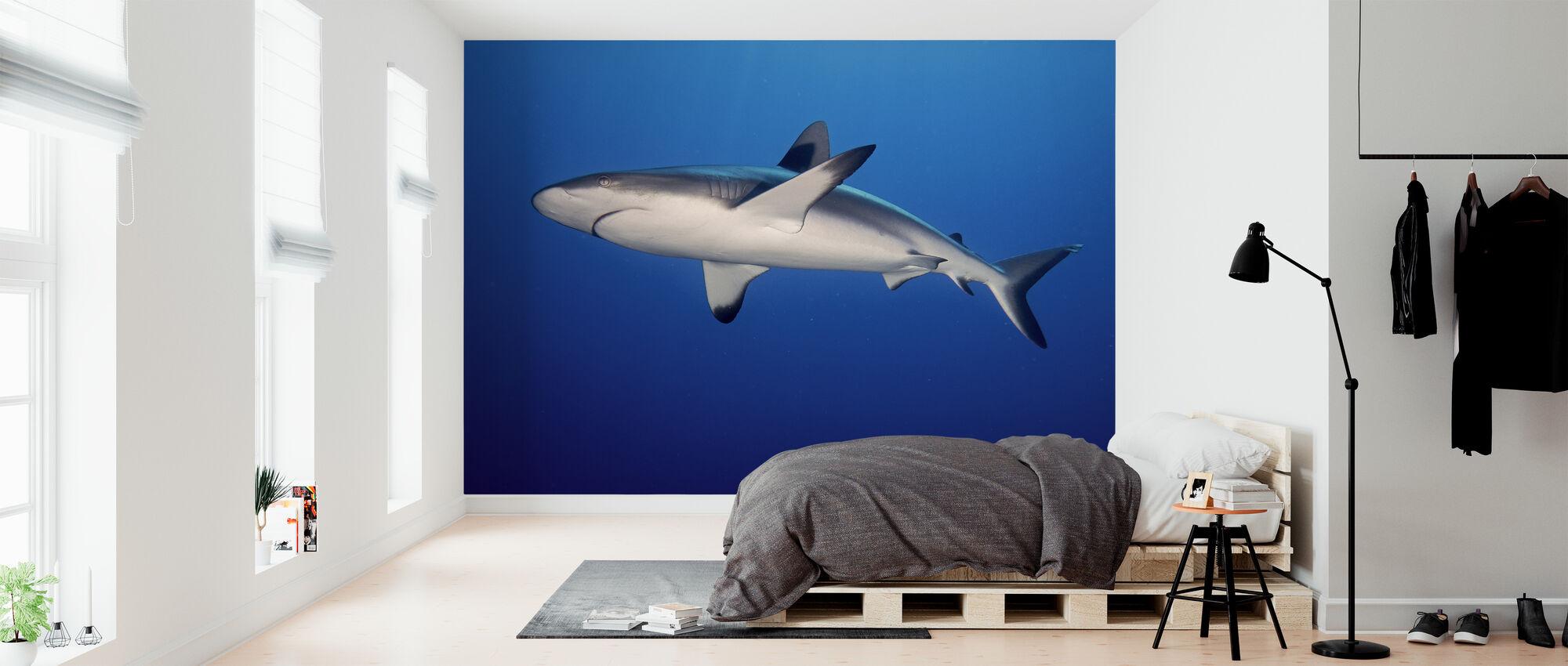 Grey Reef Shark - Wallpaper - Bedroom