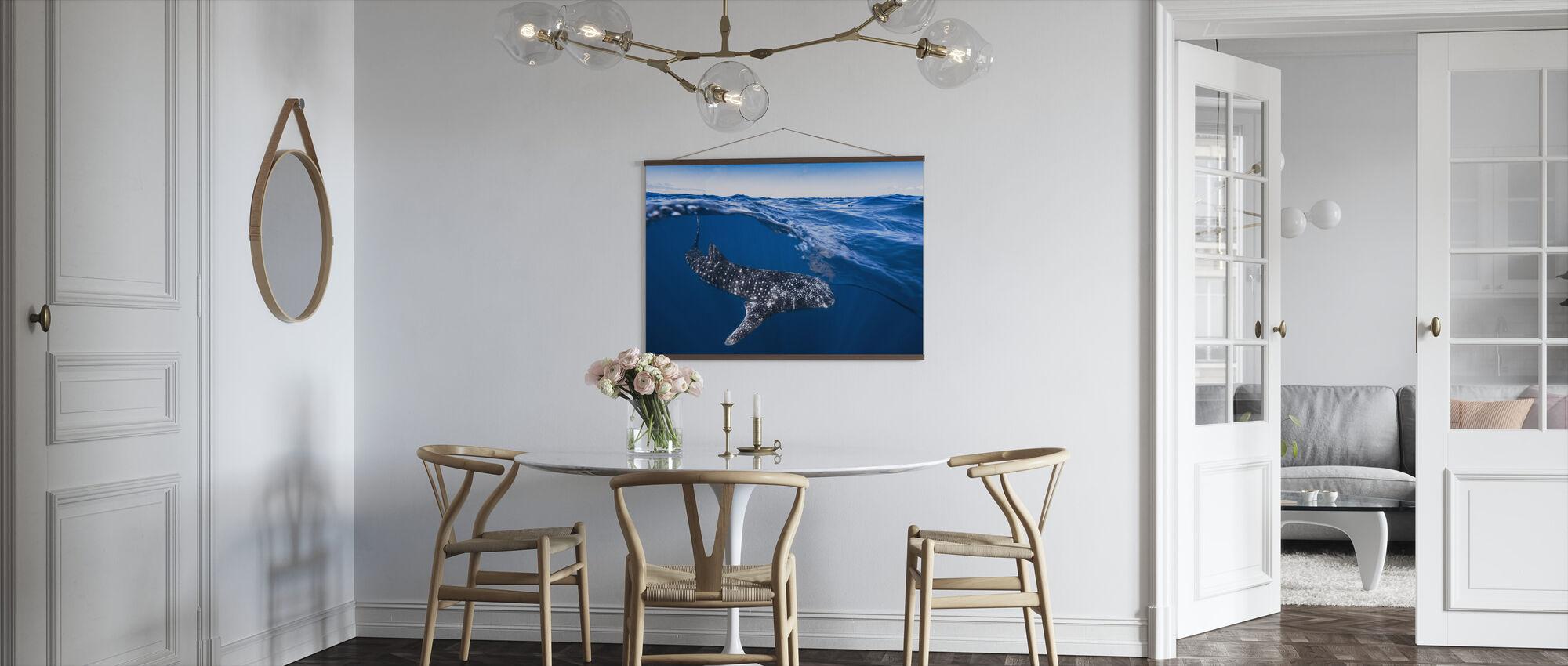 Hvalhai på delt nivå - Plakat - Kjøkken